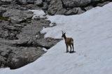 Picos de Europa walk PR PNPE 23: Ruta HorcadosRojos