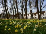 Walk in Bruges – Your private guide in Bruges