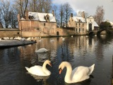 Walk in Bruges – Your guide in Bruges